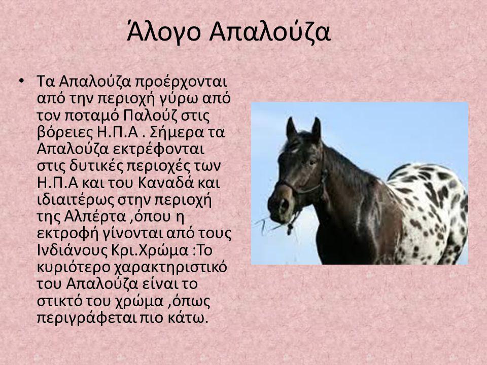 Άλογο Απαλούζα Τα Απαλούζα προέρχονται από την περιοχή γύρω από τον ποταμό Παλούζ στις βόρειες Η.Π.Α. Σήμερα τα Απαλούζα εκτρέφονται στις δυτικές περι