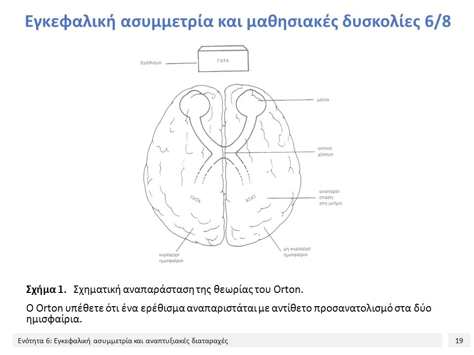 19 Ενότητα 6: Εγκεφαλική ασυμμετρία και αναπτυξιακές διαταραχές Εγκεφαλική ασυμμετρία και μαθησιακές δυσκολίες 6/8 Σχήμα 1.Σχηματική αναπαράσταση της θεωρίας του Orton.