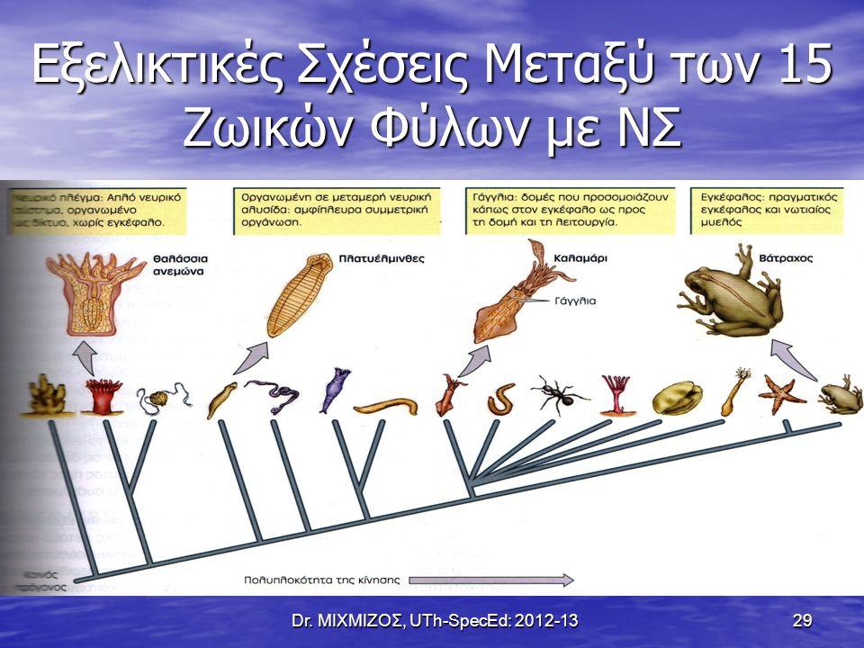 Εξελικτικές Σχέσεις Μεταξύ των 15 Ζωικών Φύλων με ΝΣ Dr. ΜΙΧΜΙΖΟΣ, UTh-SpecEd: 2012-13 29