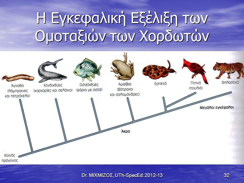 Η Εγκεφαλική Εξέλιξη των Ομοταξιών των Χορδωτών Dr. ΜΙΧΜΙΖΟΣ, UTh-SpecEd: 2012-13 32