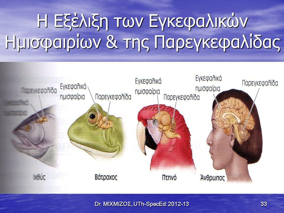 Η Εξέλιξη των Εγκεφαλικών Ημισφαιρίων & της Παρεγκεφαλίδας Dr. ΜΙΧΜΙΖΟΣ, UTh-SpecEd: 2012-13 33