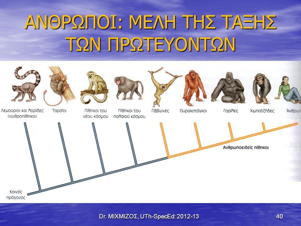 Australopithecus Πίθηκος του Νότου (Raymond Dart, 1924) Πίθηκος του Νότου (Raymond Dart, 1924) εμφανίζεται πριν από ~4 εκ.