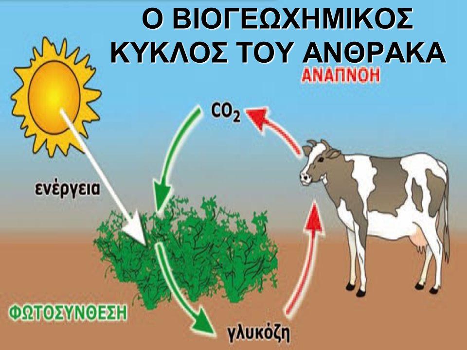 Στη βάση της ανταλλαγής του διοξειδίου του άνθρακα μεταξύ της ατμόσφαιρας και των βιοτικών παραγόντων των οικοσυστημάτων βρίσκεται η εναλλαγή δύο διαδικασιών: 1.