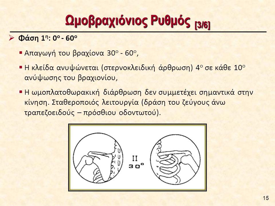 Ωμοβραχιόνιος Ρυθμός [3/6] 15  Φάση 1 η : 0 ο - 60 ο  Απαγωγή του βραχίονα 30 ο - 60 ο,  Η κλείδα ανυψώνεται (στερνοκλειδική άρθρωση) 4 ο σε κάθε 10 ο ανύψωσης του βραχιονίου,  Η ωμοπλατοθωρακική διάρθρωση δεν συμμετέχει σημαντικά στην κίνηση.