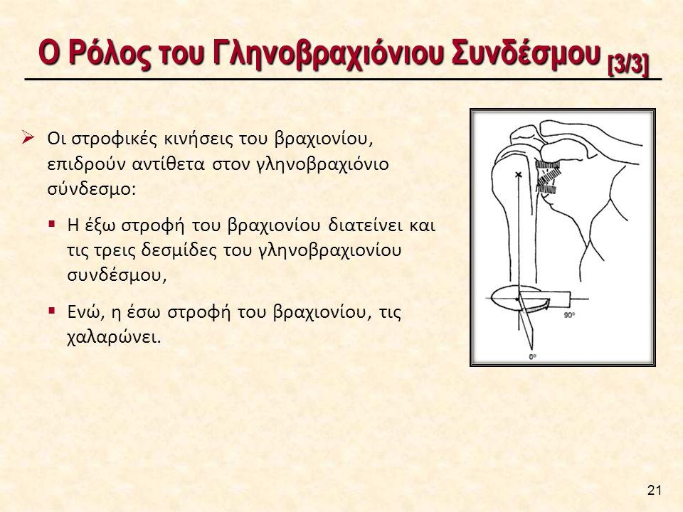 Ο Ρόλος του Γληνοβραχιόνιου Συνδέσμου [ 3/3] Ο Ρόλος του Γληνοβραχιόνιου Συνδέσμου [ 3/3] 21  Οι στροφικές κινήσεις του βραχιονίου, επιδρούν αντίθετα στον γληνοβραχιόνιο σύνδεσμο:  Η έξω στροφή του βραχιονίου διατείνει και τις τρεις δεσμίδες του γληνοβραχιονίου συνδέσμου,  Ενώ, η έσω στροφή του βραχιονίου, τις χαλαρώνει.
