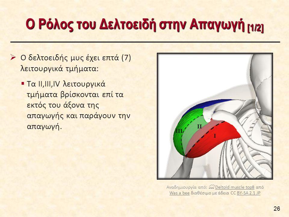 Ο Ρόλος του Δελτοειδή στην Απαγωγή [1/2] 26  Ο δελτοειδής μυς έχει επτά (7) λειτουργικά τμήματα:  Τα ΙΙ,ΙΙΙ,ΙV λειτουργικά τμήματα βρίσκονται επί τα