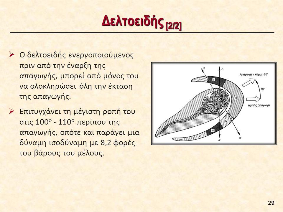 Δελτοειδής [2/2] 29  Ο δελτοειδής ενεργοποιούμενος πριν από την έναρξη της απαγωγής, μπορεί από μόνος του να ολοκληρώσει όλη την έκταση της απαγωγής.