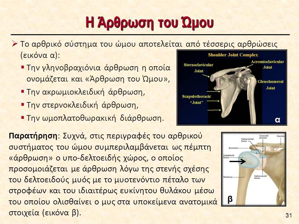 Η Άρθρωση του Ώμου  Την γληνοβραχιόνια άρθρωση η οποία ονομάζεται και «Άρθρωση του Ώμου»,  Την ακρωμιοκλειδική άρθρωση,  Την στερνοκλειδική άρθρωση,  Την ωμοπλατοθωρακική διάρθρωση.