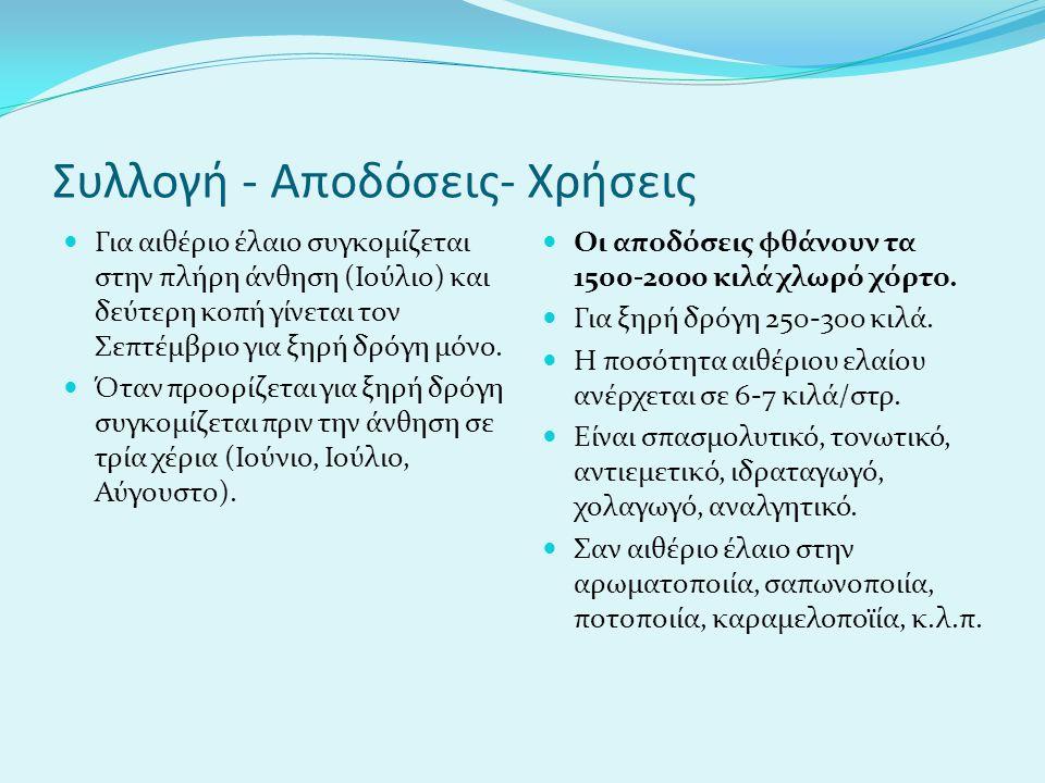 Συλλογή - Αποδόσεις- Χρήσεις Για αιθέριο έλαιο συγκομίζεται στην πλήρη άνθηση (Ιούλιο) και δεύτερη κοπή γίνεται τον Σεπτέμβριο για ξηρή δρόγη μόνο.