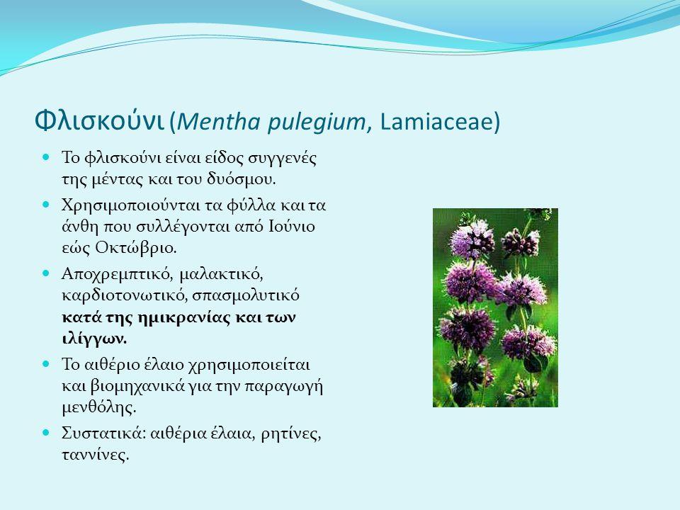 Φλισκούνι (Mentha pulegium, Lamiaceae) To φλισκούνι είναι είδος συγγενές της μέντας και του δυόσμου. Χρησιμοποιούνται τα φύλλα και τα άνθη που συλλέγο
