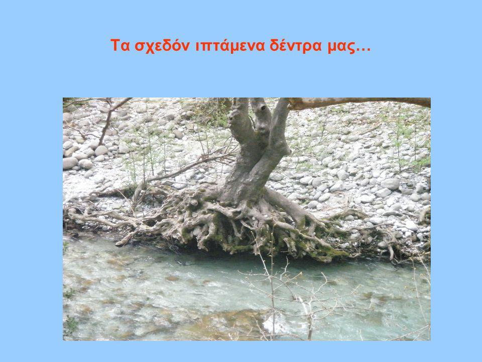 Τα σχεδόν ιπτάμενα δέντρα μας…