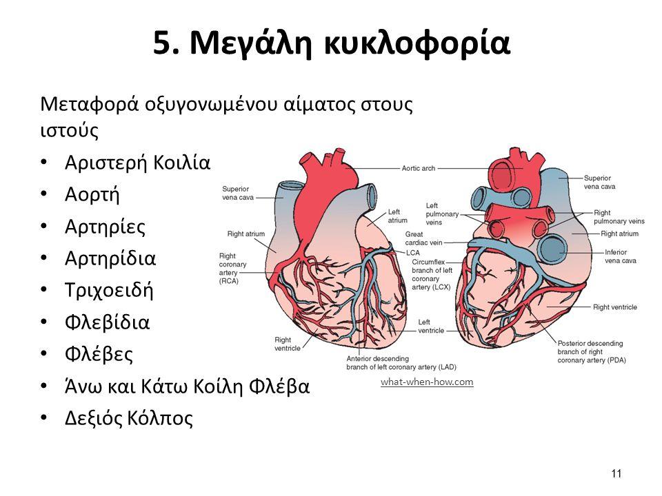 5. Μεγάλη κυκλοφορία Μεταφορά οξυγονωμένου αίματος στους ιστούς Αριστερή Κοιλία Αορτή Αρτηρίες Αρτηρίδια Τριχοειδή Φλεβίδια Φλέβες Άνω και Κάτω Κοίλη