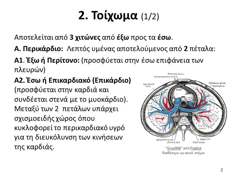 2. Τοίχωμα (1/2) Αποτελείται από 3 χιτώνες από έξω προς τα έσω. Α. Περικάρδιο: Λεπτός υμένας αποτελούμενος από 2 πέταλα: Α1. Έξω ή Περίτονο: (προσφύετ