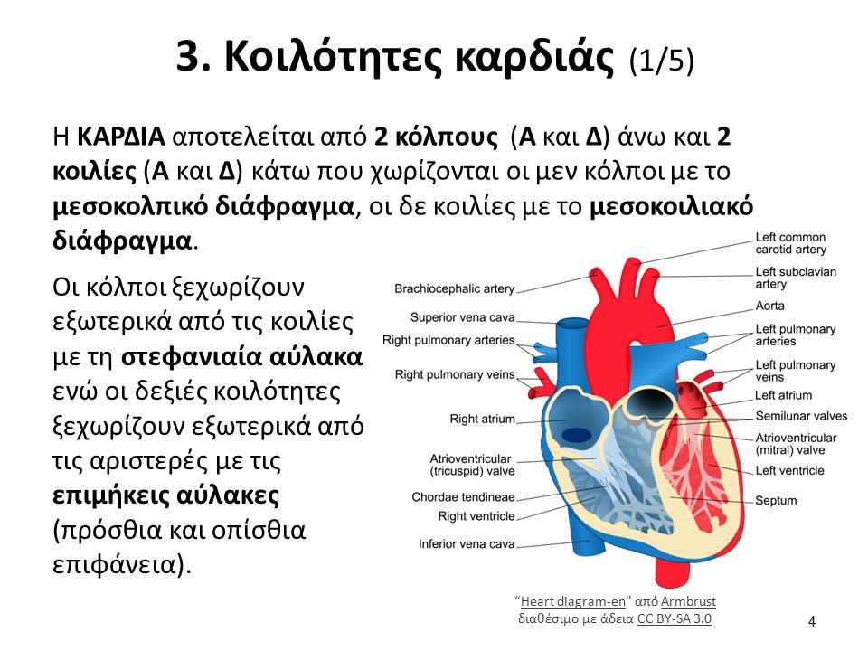 3. Κοιλότητες καρδιάς (1/5) Η ΚΑΡΔΙΑ αποτελείται από 2 κόλπους (Α και Δ) άνω και 2 κοιλίες (Α και Δ) κάτω που χωρίζονται οι μεν κόλποι με το μεσοκολπι