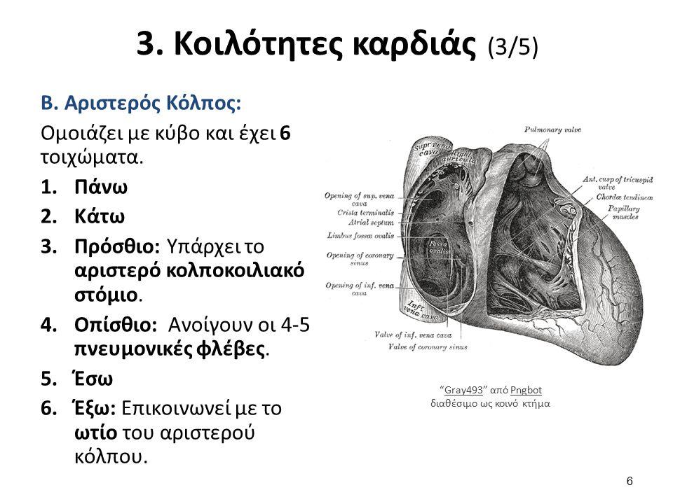 3. Κοιλότητες καρδιάς (3/5) Β. Αριστερός Κόλπος: Ομοιάζει με κύβο και έχει 6 τοιχώματα. 1.Πάνω 2.Κάτω 3.Πρόσθιο: Υπάρχει το αριστερό κολποκοιλιακό στό