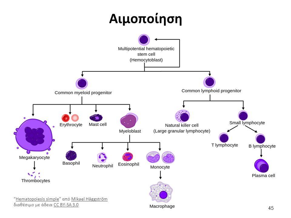 Αιμοποίηση 45 Hematopoiesis simple από Mikael Häggström διαθέσιμο με άδεια CC BY-SA 3.0Hematopoiesis simpleMikael HäggströmCC BY-SA 3.0