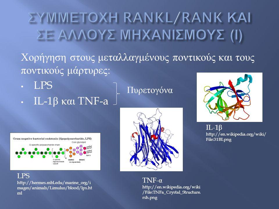 Χορήγηση στους μεταλλαγμένους ποντικούς και τους ποντικούς μάρτυρες : LPS IL-1 β και TNF-a Πυρετογόνα LPS http://hermes.mbl.edu/marine_org/i mages/animals/Limulus/blood/lps.ht ml IL-1 β http://en.wikipedia.org/wiki/ File:31BI.png TNF- α http://en.wikipedia.org/wiki /File:TNFa_Crystal_Structure.