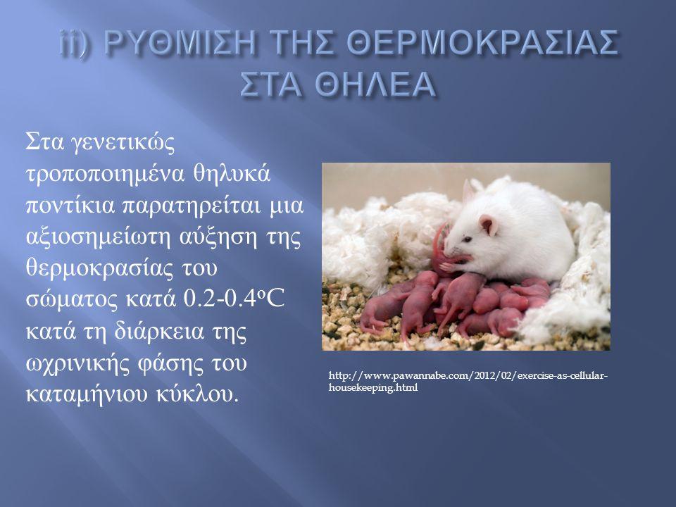 http://www.pawannabe.com/2012/02/exercise-as-cellular- housekeeping.html Στα γενετικώς τροποποιημένα θηλυκά ποντίκια παρατηρείται μια αξιοσημείωτη αύξηση της θερμοκρασίας του σώματος κατά 0.2-0.4 ο C κατά τη διάρκεια της ωχρινικής φάσης του καταμήνιου κύκλου.