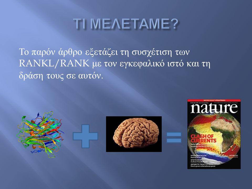 T α ποντίκια που δημιουργήθηκαν ήταν RANK knockout δηλαδή δεν εξέφραζαν τον υποδοχέα RANK.