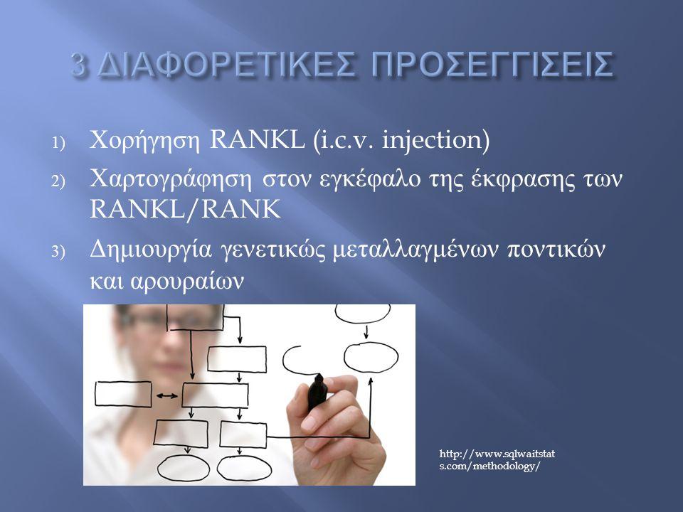 1) Χορήγηση RANKL (i.c.v.