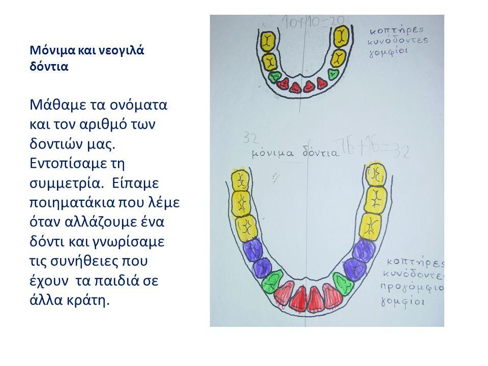Μόνιμα και νεογιλά δόντια Μάθαμε τα ονόματα και τον αριθμό των δοντιών μας. Εντοπίσαμε τη συμμετρία. Είπαμε ποιηματάκια που λέμε όταν αλλάζουμε ένα δό