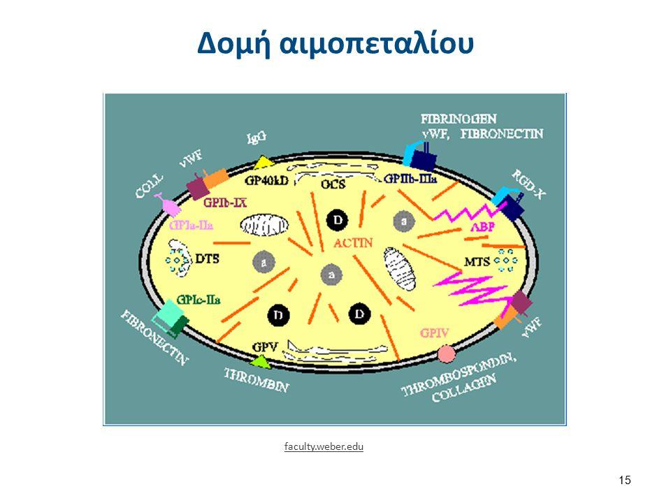 Δομή αιμοπεταλίου 15 faculty.weber.edu