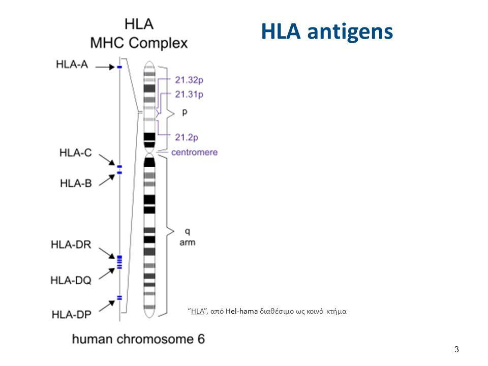 HLA antigens HLA , από Hel-hama διαθέσιμο ως κοινό κτήμαHLA 3