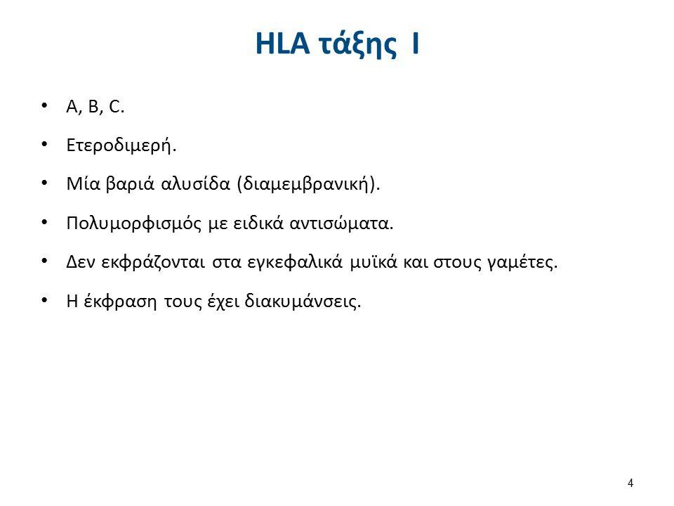 ΗLA τάξης Ι A, B, C. Ετεροδιμερή. Μία βαριά αλυσίδα (διαμεμβρανική). Πολυμορφισμός με ειδικά αντισώματα. Δεν εκφράζονται στα εγκεφαλικά μυϊκά και στου