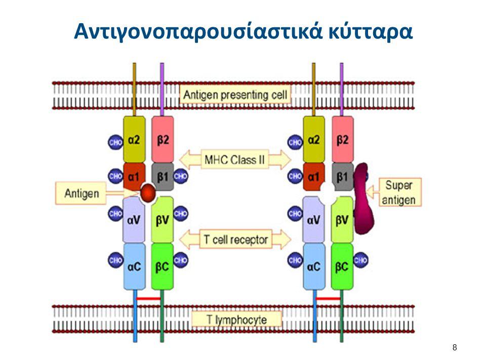 Αντιγονοπαρουσίαστικά κύτταρα 8