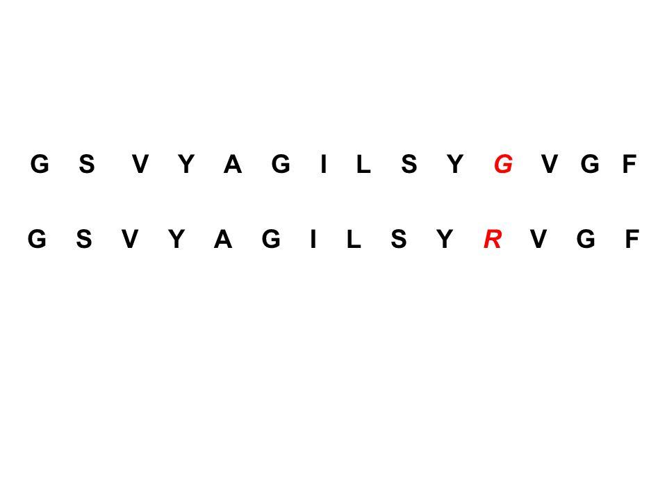 G S V Y A G I L S Y G V G F G S V Y A G I L S Y R V G F