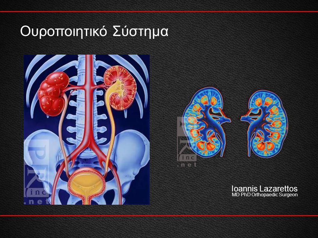 2 Σύστημα παραγωγής και απέκκρισης των ούρων Ioannis Lazarettos MD PhD Orthopaedic Surgeon Ρύθμιση ηλεκτρολυτών Διατήρηση οξεοβασικής ισορροπίας