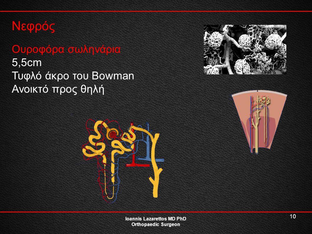 10 Νεφρός Ioannis Lazarettos MD PhD Orthopaedic Surgeon Ουροφόρα σωληνάρια 5,5cm Τυφλό άκρο του Bowman Ανοικτό προς θηλή