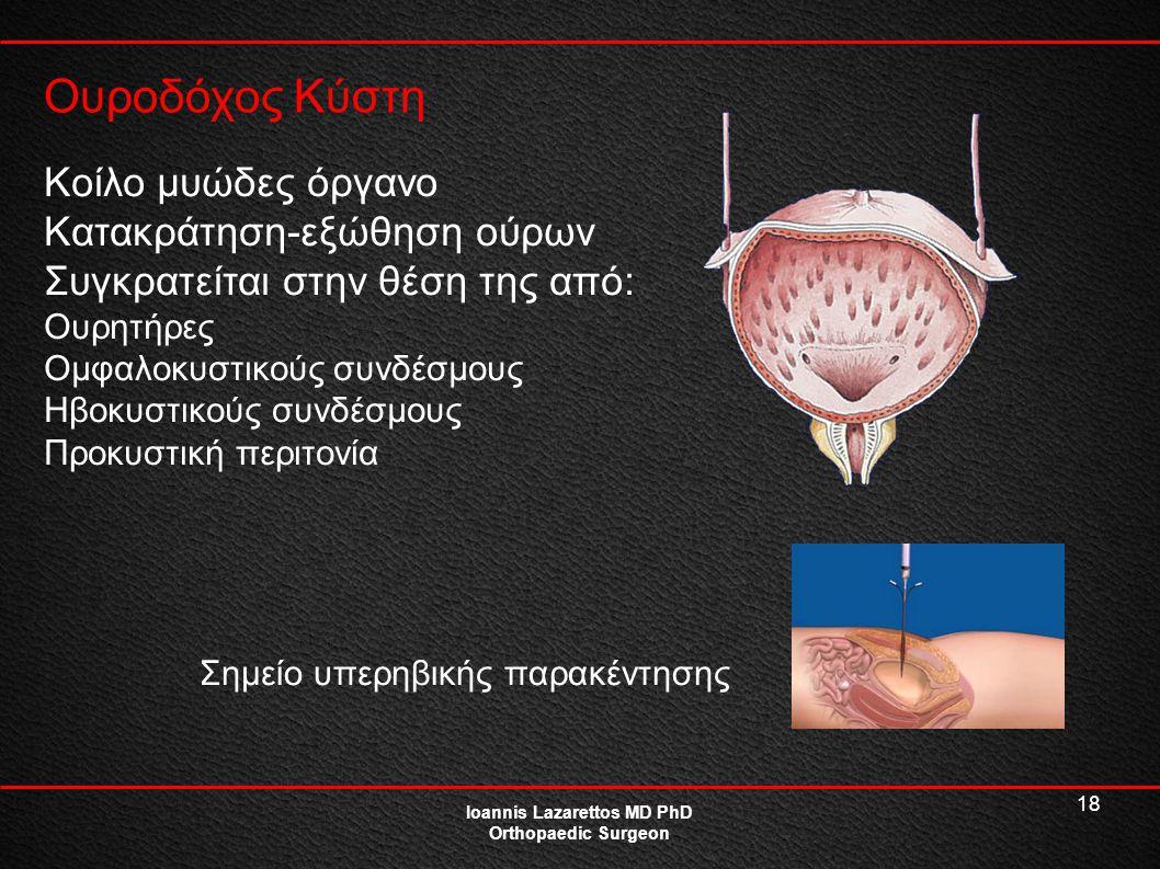 18 Ουροδόχος Κύστη Ioannis Lazarettos MD PhD Orthopaedic Surgeon Κοίλο μυώδες όργανο Κατακράτηση-εξώθηση ούρων Συγκρατείται στην θέση της από: Ουρητήρ