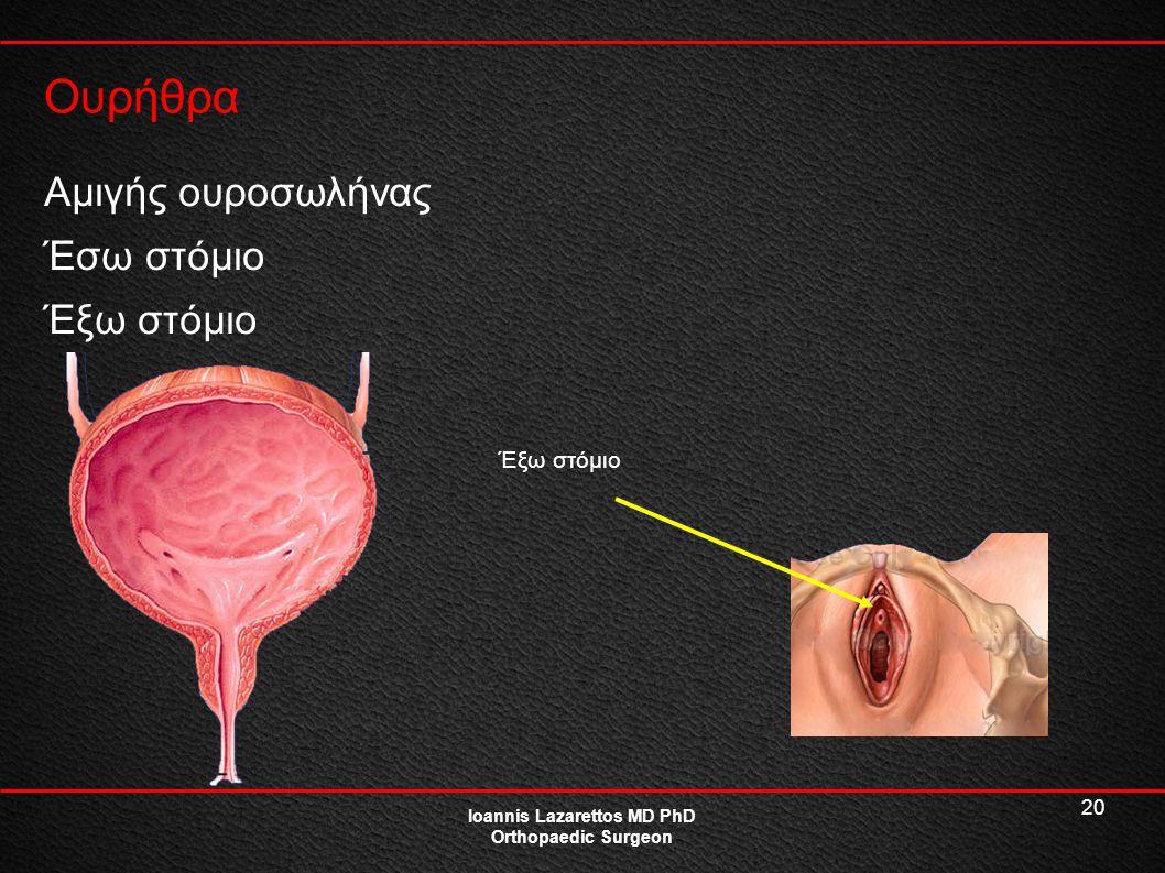 20 Ουρήθρα Ioannis Lazarettos MD PhD Orthopaedic Surgeon Αμιγής ουροσωλήνας Έσω στόμιο Έξω στόμιο