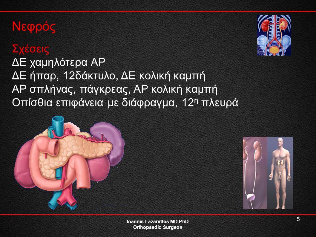 5 Νεφρός Ioannis Lazarettos MD PhD Orthopaedic Surgeon Σχέσεις ΔΕ χαμηλότερα ΑΡ ΔΕ ήπαρ, 12δάκτυλο, ΔΕ κολική καμπή ΑΡ σπλήνας, πάγκρεας, ΑΡ κολική κα