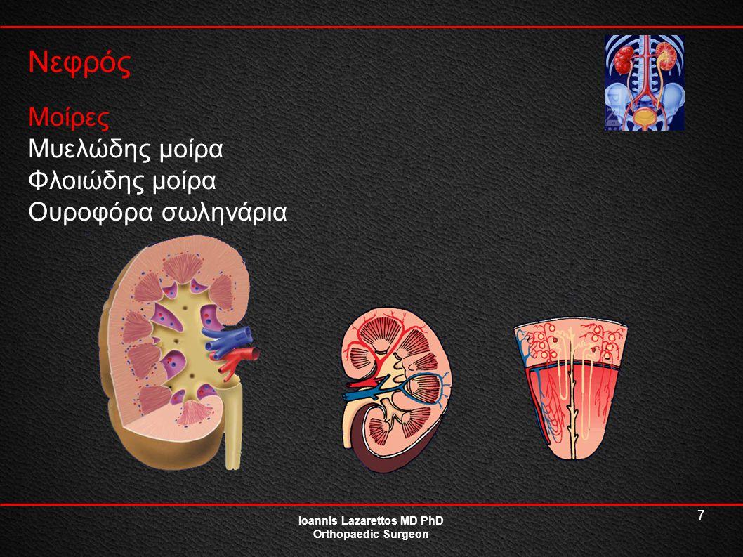 18 Ουροδόχος Κύστη Ioannis Lazarettos MD PhD Orthopaedic Surgeon Κοίλο μυώδες όργανο Κατακράτηση-εξώθηση ούρων Συγκρατείται στην θέση της από: Ουρητήρες Ομφαλοκυστικούς συνδέσμους Ηβοκυστικούς συνδέσμους Προκυστική περιτονία Σημείο υπερηβικής παρακέντησης