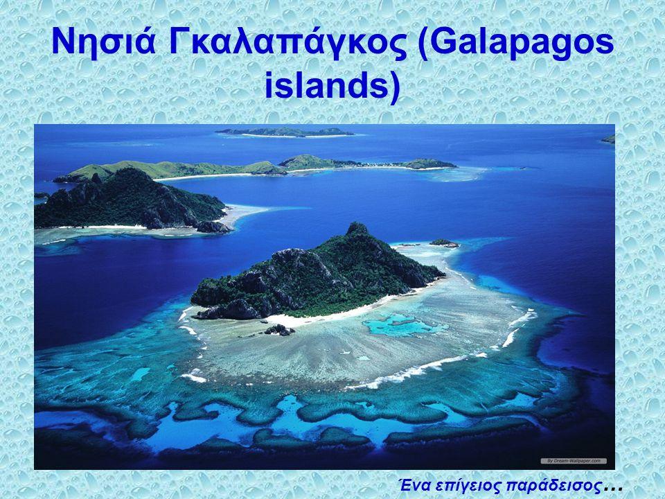 Τα νησιά Γκαλαπάγκος είναι ένα αρχιπέλαγος των ηφαιστειακών νησιών που βρίσκεται στον Ειρηνικό Ωκεανό.