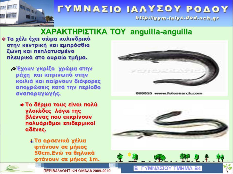 ΤΑΞΙΝΟΜΙΣΗ ΤΟΥ anguilla-anguilla Το χέλι ανήκει στην οικογένεια των εγχέλιδων με το επιστημονικό όνομα έγχελυς.
