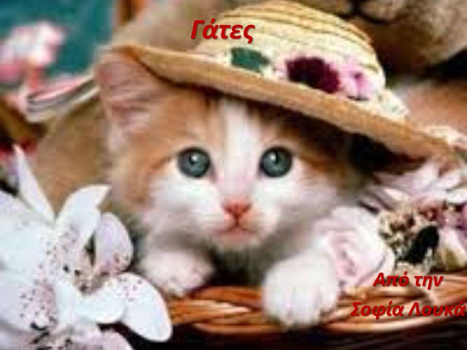 Γάτες Από την Σοφία Λουκά