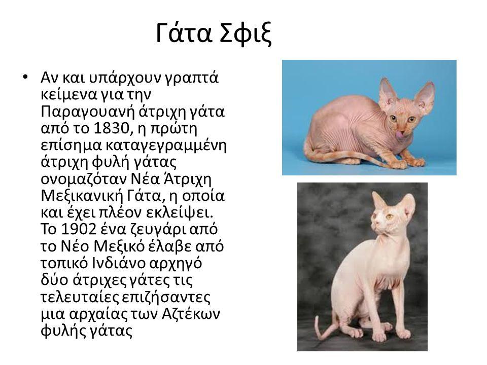 Γάτα Σφιξ Αν και υπάρχουν γραπτά κείμενα για την Παραγουανή άτριχη γάτα από το 1830, η πρώτη επίσημα καταγεγραμμένη άτριχη φυλή γάτας ονομαζόταν Νέα Άτριχη Μεξικανική Γάτα, η οποία και έχει πλέον εκλείψει.