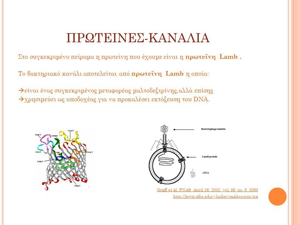 ΠΡΩΤΕΙΝΕΣ-ΚΑΝΑΛΙΑ Στο συγκεκριμένο πείραμα η πρωτείνη που έχουμε είναι η πρωτεΐνη Lamb.