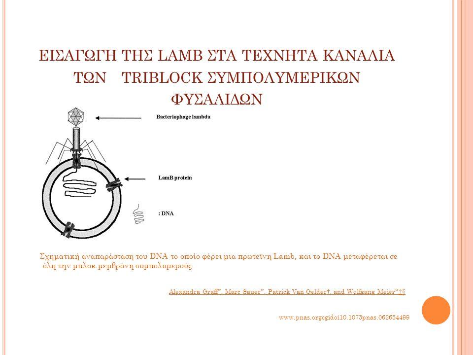 ΕΙΣΑΓΩΓΗ ΤΗΣ LAMB ΣΤΑ ΤΕΧΝΗΤΑ ΚΑΝΑΛΙΑ ΤΩΝ TRIBLOCK ΣΥΜΠΟΛΥΜΕΡΙΚΩΝ ΦΥΣΑΛΙΔΩΝ www.pnas.orgcgidoi10.1073pnas.062654499 Σχηματική αναπαράσταση του DNA το οποίο φέρει μια πρωτεΐνη Lamb, και το DNA μεταφέρεται σε όλη την μπλοκ μεμβράνη συμπολυμερούς.