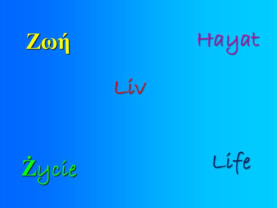 Liv Ż ycie Ζωή Hayat Life