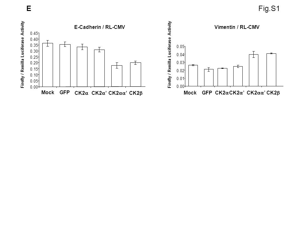 E E-Cadherin / RL-CMV 0.00 0.05 0.10 0.15 0.20 0.25 0.30 0.35 0.40 0.45 MockGFP CK2 Firefly / Renilla Luciferase Activity Vimentin / RL-CMV 0.00 0.01 0.02 0.03 0.04 0.05 Firefly / Renilla Luciferase Activity MockGFP CK2