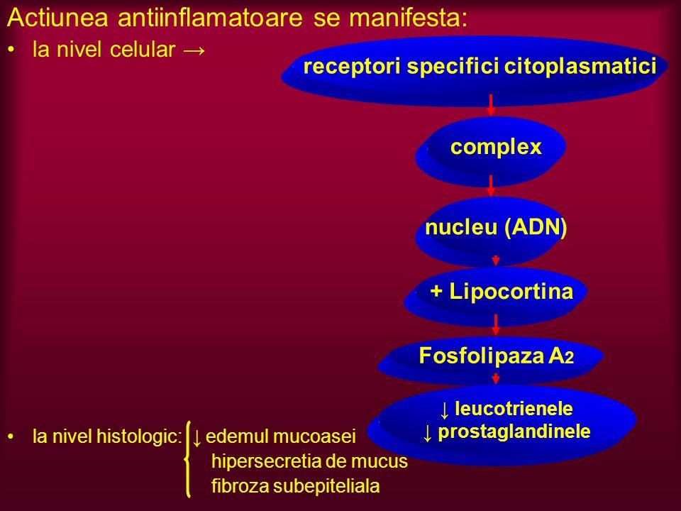 Actiunea antiinflamatoare se manifesta: la nivel celular la nivel histologic: edemul mucoasei hipersecretia de mucus fibroza subepiteliala receptori s