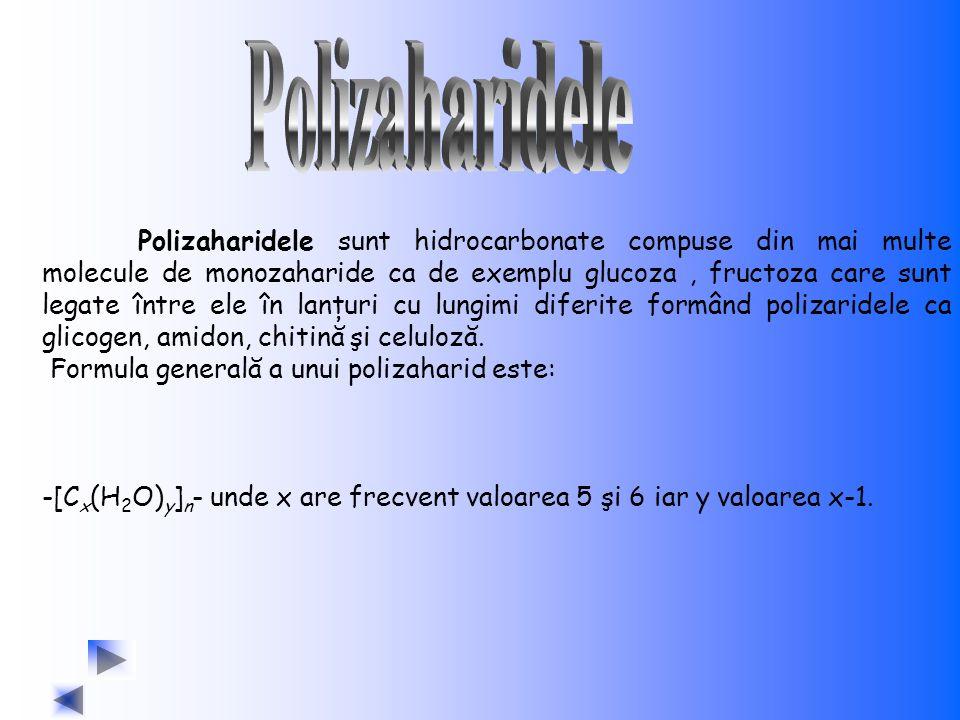 Polizaharidele sunt hidrocarbonate compuse din mai multe molecule de monozaharide ca de exemplu glucoza, fructoza care sunt legate între ele în lanţur