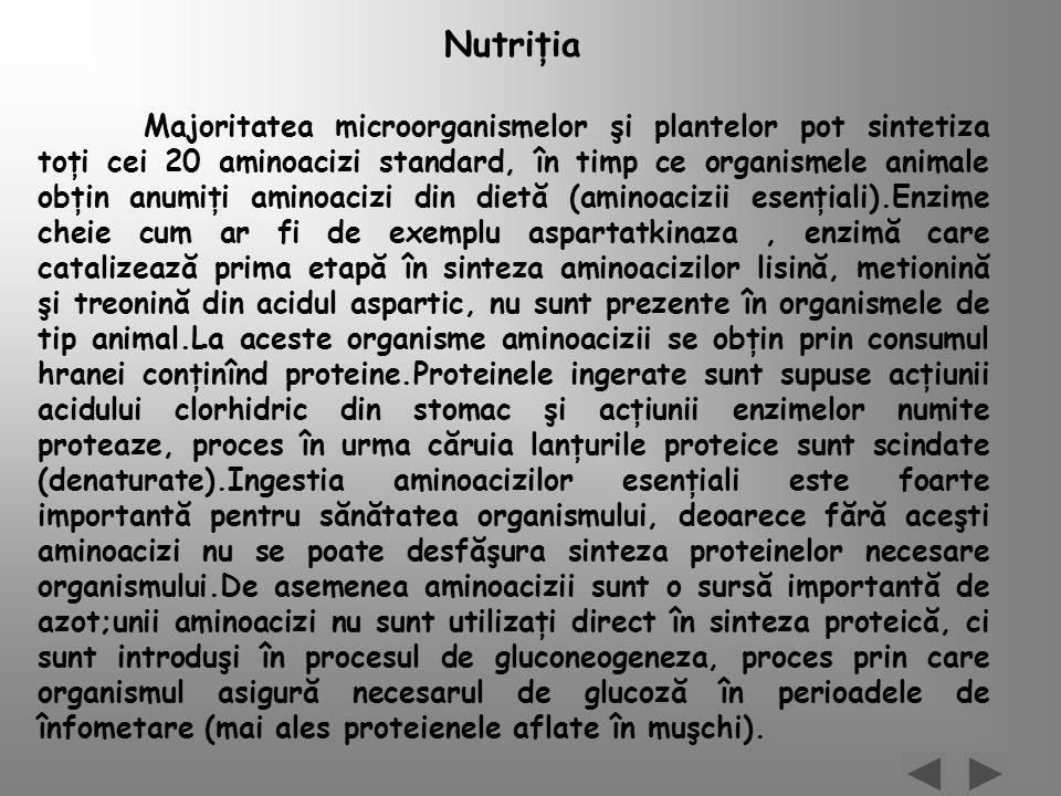 Nutriţia Majoritatea microorganismelor şi plantelor pot sintetiza toţi cei 20 aminoacizi standard, în timp ce organismele animale obţin anumiţi aminoa