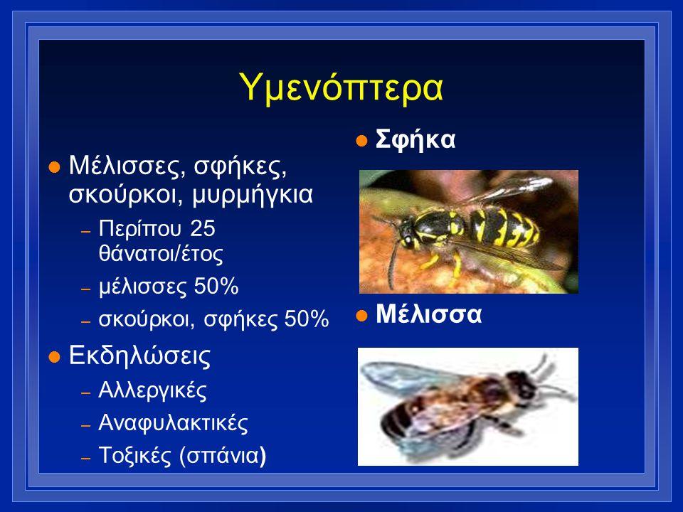 Υμενόπτερα l Μέλισσες, σφήκες, σκούρκοι, μυρμήγκια – Περίπου 25 θάνατοι/έτος – μέλισσες 50% – σκούρκοι, σφήκες 50% l Εκδηλώσεις – Αλλεργικές – Αναφυλα