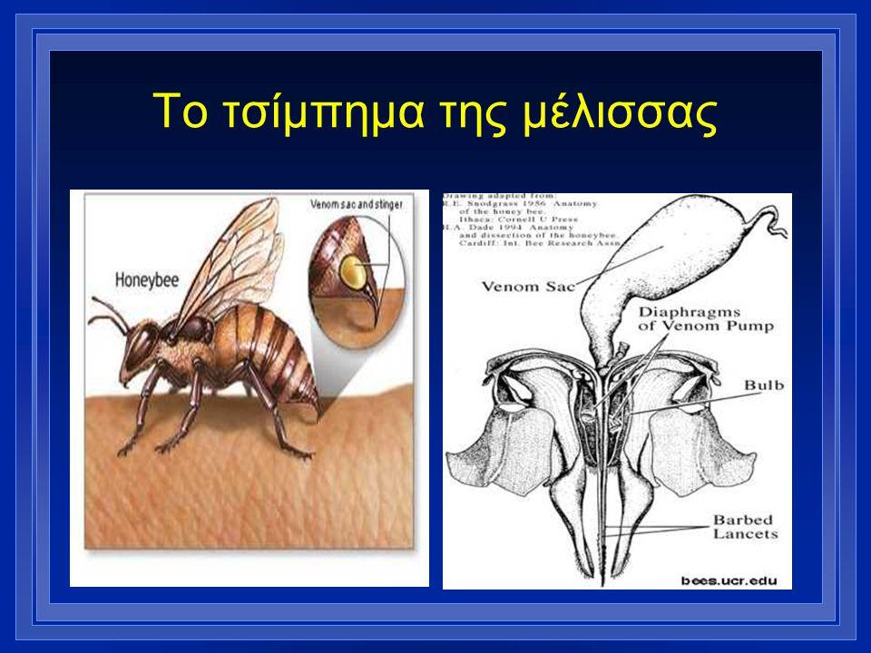 Το τσίμπημα της μέλισσας