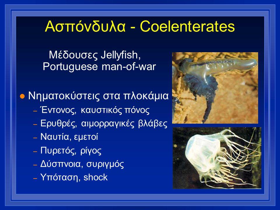 Ασπόνδυλα - Coelenterates Μέδουσες Jellyfish, Portuguese man-of-war l Νηματοκύστεις στα πλοκάμια – Έντονος, καυστικός πόνος – Ερυθρές, αιμορραγικές βλ